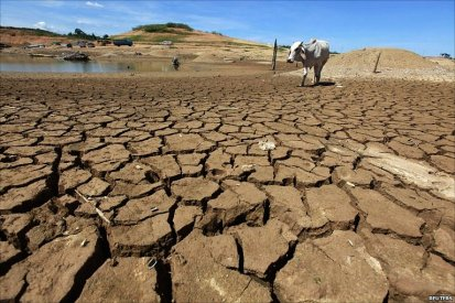 drought-cow