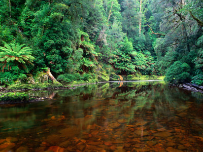 blakers-rob-rapid-river-in-rainforest-tarkine-tasmania-australia