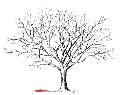 tree heart aeg