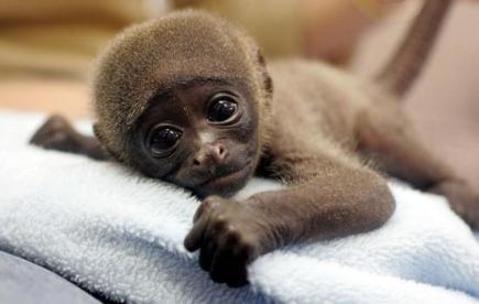 baby_monkey_2