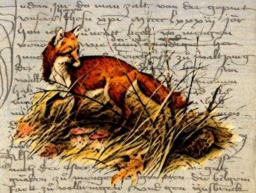 fox.2