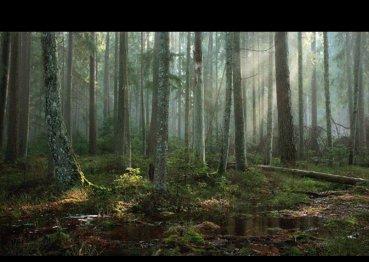 deep woods